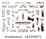 vector set of calligraphic... | Shutterstock .eps vector #562245871