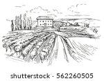vineyard hand drawn vector... | Shutterstock .eps vector #562260505