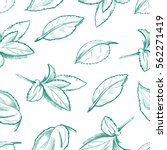eco peppermint tea  fresh mint... | Shutterstock .eps vector #562271419