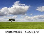 spring landscape with green... | Shutterstock . vector #56228170