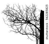 realistic tree silhouette ... | Shutterstock .eps vector #562285825