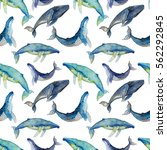 watercolor whales  hand draw... | Shutterstock . vector #562292845