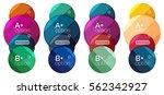 set of round option diagram... | Shutterstock .eps vector #562342927