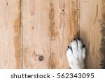 dog feet and legs on wood.... | Shutterstock . vector #562343095