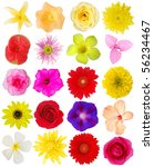 Assorted Of 20 Botanical Blooms