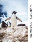 Small photo of Adelie penguin (Pygoscelis adeliae) on on the snow