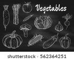 vector chalk sketched... | Shutterstock .eps vector #562364251