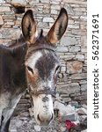 Small photo of Brown donkey in the village Vourliotes on the aegean island Samos