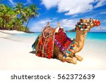 camel ride on the tropical beach | Shutterstock . vector #562372639