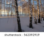 Winter Evening Landscape With...