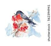 watercolor bullfinch sitting in ...   Shutterstock . vector #562394941
