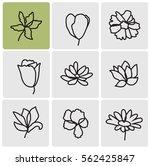 flowers line set   Shutterstock .eps vector #562425847