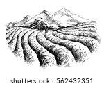 tea plantation landscape in... | Shutterstock .eps vector #562432351