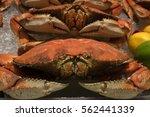 red orange fresh caught deep... | Shutterstock . vector #562441339
