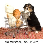 Stock photo cute australian shepherd puppy pushing shopping cart with large bones 56244289