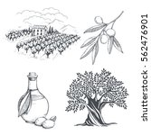 hand drawn olive collection.... | Shutterstock .eps vector #562476901