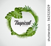 tropical vector illustration... | Shutterstock .eps vector #562523029