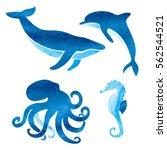 watercolor sea animals set.... | Shutterstock .eps vector #562544521
