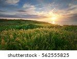 Sundown Landscape Composition....