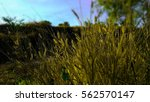 Meadows And Sky.grass Pampas...