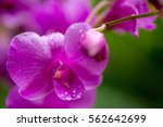close up macro detail of the... | Shutterstock . vector #562642699