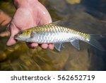 fish in hand | Shutterstock . vector #562652719