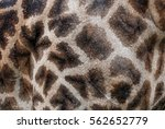 giraffe skin | Shutterstock . vector #562652779