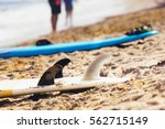 surfboard on the sand dries ... | Shutterstock . vector #562715149