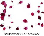 Stock vector abstract background with flying pink red rose petals vector illustration isolated on white 562769527