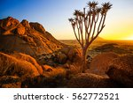 quiver tree   spitzkoppe ... | Shutterstock . vector #562772521