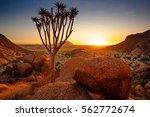 quiver tree   spitzkoppe ... | Shutterstock . vector #562772674