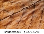 Dried tobacco leave with fine...