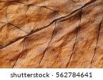 Tobacco. dried tobacco leave...