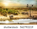 Stock photo dreamy scene of common south african safari wildlife animals together at sunset 562792219