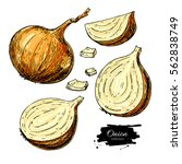 onion hand drawn set. full ... | Shutterstock . vector #562838749