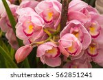 the very beautiful petals and...   Shutterstock . vector #562851241