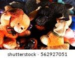 cute black poodle hiden on pile ... | Shutterstock . vector #562927051