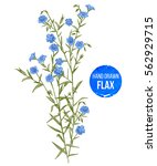 hand drawn colorful flax... | Shutterstock .eps vector #562929715