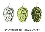 stylized hand drawn hop plant... | Shutterstock .eps vector #562929754