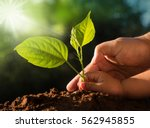 planting together concept. kid... | Shutterstock . vector #562945855