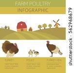poultry farming. turkey family...   Shutterstock .eps vector #562968679