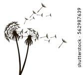 dandelion fluffy flower and... | Shutterstock .eps vector #562987639