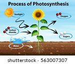 Diagram Showing Process Of...