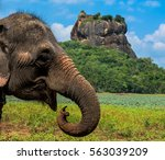 elephant in famous sigiriya... | Shutterstock . vector #563039209