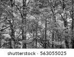 tropical rainforest landscape ...   Shutterstock . vector #563055025