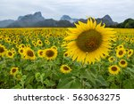Bright Yellow Sunflower At Wa...