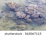 Coral Reef In Low Tide In...