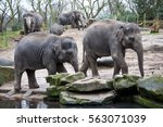 elephant family goes to the... | Shutterstock . vector #563071039