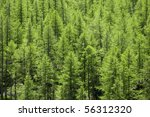 Full Image Of A Coniferous...