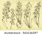 set of vector graphic...   Shutterstock .eps vector #563136397